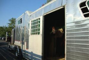 Horse Transportation 11