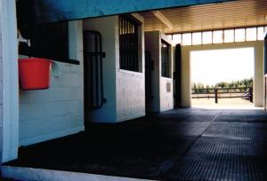 Horse Transportation 14