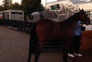 Horse Transportation 2