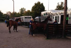 Horse Transportation 5