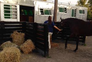 Horse Transportation 6