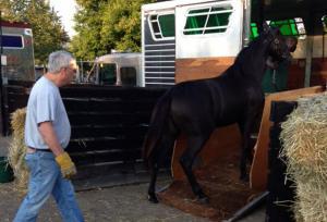 Horse Transportation 7