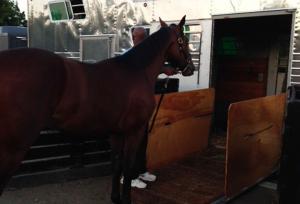 Horse Transportation 8