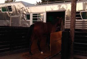 Horse Transportation 9