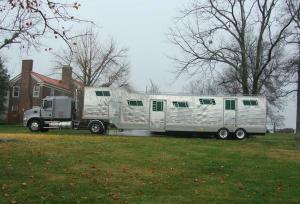 Horse Transportation Shipping 5