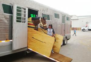Horse Transportation Shipping 6
