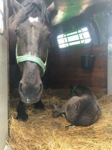 Horse shipping