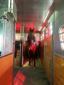 horse shipping transportation double-stall 4