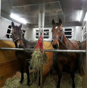 horse shipping transportation double-stall 1