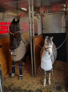 horse shipping transportation double-stall 3