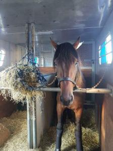 horse shipping transportation double-stall 2