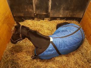 horse shipping doyle
